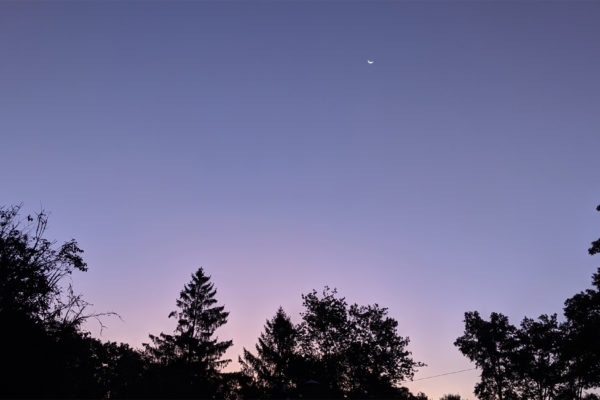 Sky at daybreak - deep blue and pink with tree tops showing.